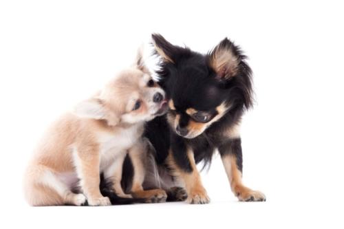 2 honden tijdens een hondenshoot