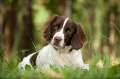 hond in het gras tijdens fotoshoot