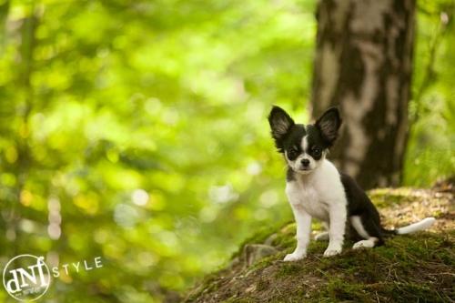 hondenportret in de natuur in rekem