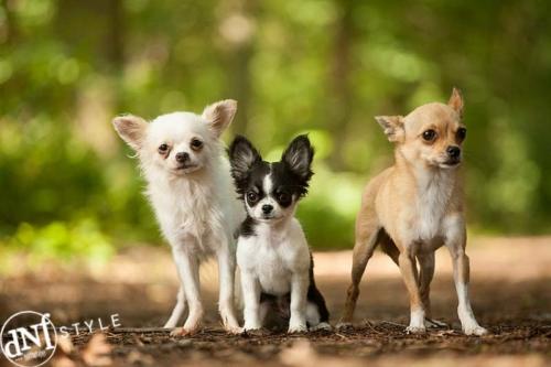 3 honden tijdens een buitenshoot
