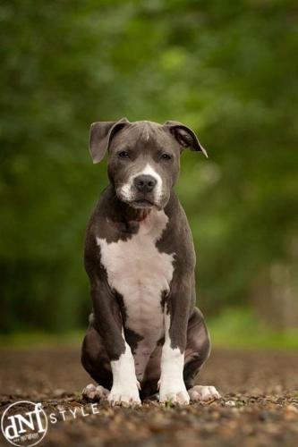 hond tijdens hondenshoot in de natuur