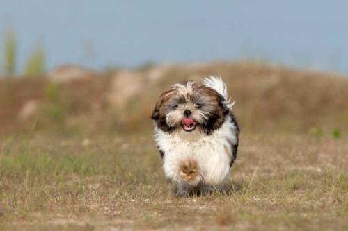 hondenshoot in de natuur