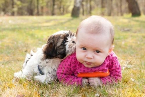 buitenshoot van baby en hond op het gras in de zon